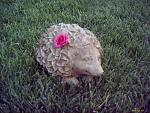 Shaymin-esque lawn decoration